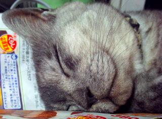 cat090816-03.JPG