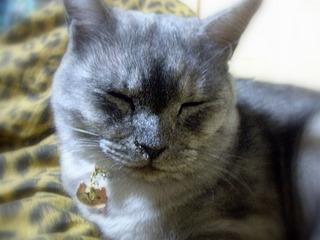 cat081008.jpg